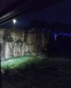 ライトに照らし出された芝生の右端のカメのように見えるのは実はハイエナ